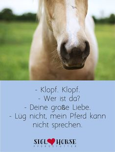 große Liebe Horse Riding Pants, Trail Riding Horses, Horse Riding Quotes, Horse Riding Tips, Horse Quotes, Horseback Riding Outfits, Horseback Riding Lessons, Horse And Human, All About Horses