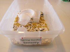 Seed sensory play and planting...