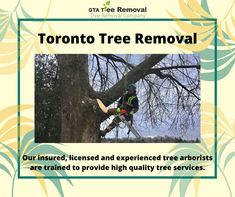 From tree disease protection to pruning and trimming, we put expertise and passion into the care of your trees and the greening of your environment. Call @GtaTreeRemoval at +647-641-6881 now. Gta, Environment, How To Remove, Trees, Passion, Home Decor Trees, Environmental Psychology, Wood, Plant