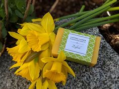 Cold Process Soap   Surrey, BC   LASTING LATHER Handcrafted Soap Co. Cold Process Soap, Daffodils