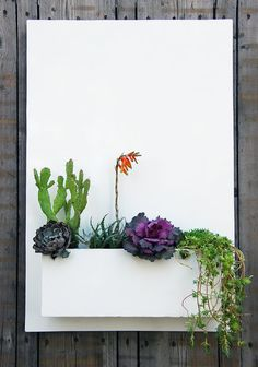 20 x 30 Modern White Metal Succulent Wall Decor & by UrbanMettle Wall Mounted Planters, Metal Wall Planters, Types Of Succulents, Colorful Succulents, Backyard Ideas For Small Yards, Succulent Wall, Succulent Ideas, Succulent Landscaping, Low Maintenance Garden