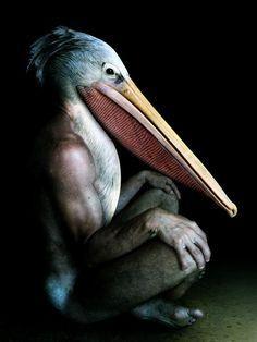 Francesco Sambo, hybrid animal bird photography