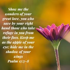 Psalms Show me the wonders of your great love, you who save by your right hand those who take refuge in you from their foes. hide me in the shadow of your wings Psalm 17, Bible Psalms, Bible Verses Quotes, Scriptures, Scripture For Today, Jesus Painting, New International Version, Praise God, Great Love