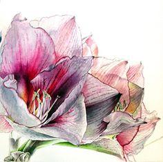 helen campbell botanic art | BotanicalArtists.com | Helen Campbell | Botanical Art, Paintings ...