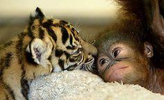 precious animal babies