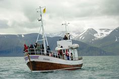 Whale whaching Húsavík