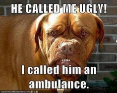 Funny Pictures, Funny jokes and so much more | Jokideo | He called me ugly | http://www.jokideo.com
