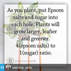 "Gefällt 1 Mal, 1 Kommentare - @alexandravicunaperry auf Instagram: ""#Repost @sabrina_soto with @repostapp.・・・#Tip"""