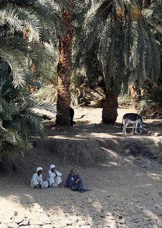 farmers resting along the Nile River Bank, Egypt