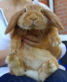 Chubby floppy-earred bunnies.