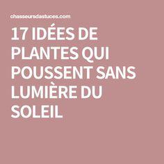17 IDÉES DE PLANTES QUI POUSSENT SANS LUMIÈRE DU SOLEIL