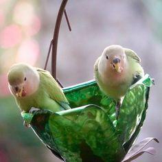 Cherry Blossom Suet Feeder - Desert Steel Co. Pretty Birds, Love Birds, Beautiful Birds, Animals Beautiful, Exotic Birds, Colorful Birds, Hanging Bird Feeders, How To Attract Birds, Kinds Of Birds