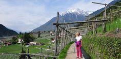 Algunder Waalweg  Wanderung von Töll am Algunder Waalweg nach Gratsch. Herrliche und familienfreundliche Wanderung bei Meran in Südtirol.  http://www.almenrausch.at/touren/wanderungen/tour/algunder-waalweg-von-toell1745.html
