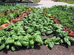 Community Gardening Resources    University of Illinois Extension
