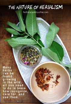 The Nature of Herbalism | Herbal Academy of New England