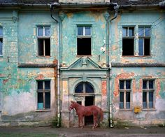 Red Horse before Colorful Home
