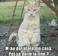 Funny Stuff, Wattpad, Humor, Cats, Memes, Funny Things, Gatos, Humour, Meme