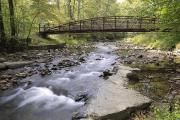 Asheville campground - Facility Details - NORTH MILLS RIVER, NC - Recreation.gov