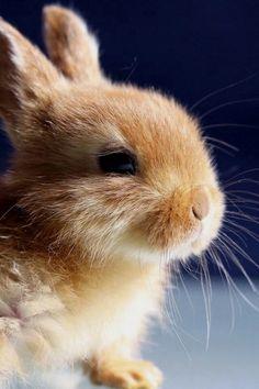 Perky rabbit #rabbits