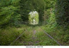 Enjoy this beautiful view of a natural tunnel, made by trees, surrounding a railway. :)