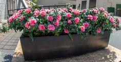 A custom creation: artificial flower azaleas in a planter.