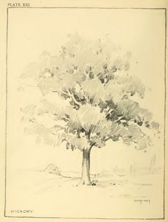 Drawing Foliage with Pencils — This is an article from an old vintage book about drawing lessons & tutorials for how to draw foliage, shrubs, and trees.Drawing Trees with Pencils