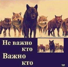 Stupid Memes, Funny Memes, Funny Shit, Russian Humor, Fun Live, Gorillaz, Just For Fun, Animal Memes, Best Memes