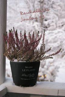 XL Cheap & Chic: Tunnelmallista Joulua - Merry Christmas Merry Christmas, Chic, Plants, Merry Little Christmas, Shabby Chic, Elegant, Wish You Merry Christmas, Plant, Planets