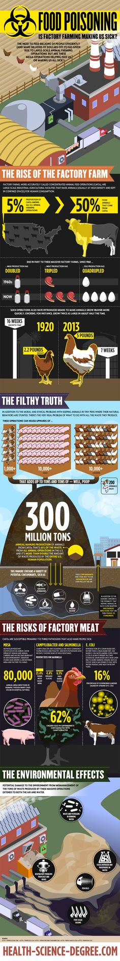 Risks of Factory Farming : Overconsumption of meat by humans during the last decades has led to the development of large scale animal farming plants for the sake of massive animal food production. But overdoing with nature sooner or later ends up with detrimental effects on earth's ecosystem.  > http://infographicsmania.com/risks-of-factory-farming/?utm_source=Pinterest&utm_medium=ZAKKAS&utm_campaign=SNAP