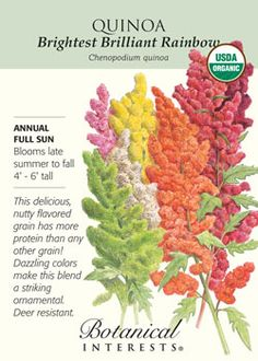 Planted for 2012. Last year they didn't germinate (or the birds ate them). Since I'm an amaranth freak, I figured quinoa was a good bet too. The awesome illustration didn't hurt either.