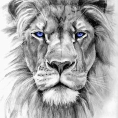 #lion #Leo #leolion #starsign #gorgeous #drawing #amazingart #art #artist #artists #credit #to #unknown #artistsoninstagram #blueeyes #possible #tattoo #surely #impossible #notpossible #sodetailed #detail