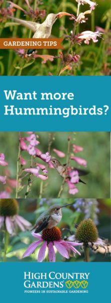 Make sure your habitat garden is full of a season's worth of hummingbird favorites. They will keep your garden humming with jewel-like color. Here are 5 tips to attract and support hummingbirds in your garden.