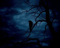 tree creepy birds Halloween night dark fall forest autumn Witch raven goth gothic dark forest crow pagan wicca enchantment