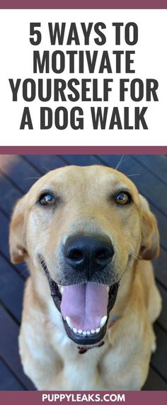 5 ways to motivate yourself for a dog walk. How to make walking your dog a part of your daily routine.