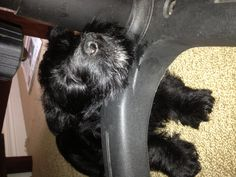 Thistle having a nap! Dogs, Life, Animals, Animales, Animaux, Pet Dogs, Doggies, Animal, Dog