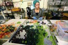 New cannabis-minded enterprises in Boulder County target health-conscious consumers, while others provide support services to the thriving marijuana industry.