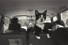 彼にはシークレットサービスがついていて、退屈したときはいつでもドライブに連れ出してくれた。   クリントン家のネコ、ソックスが史上最高の猫だった15の理由