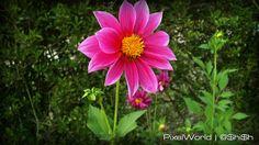 Beautiful Flower by ashish_mahaur, via Flickr
