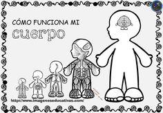 cuadernillo-Como-funciona-mi-cuerpo-1.jpg (1040×720)