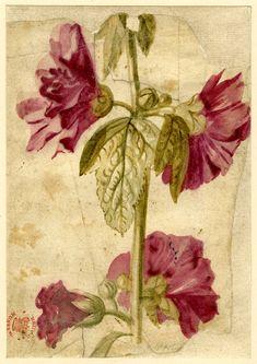 Jan van Huysum (Dutch, 1697-1749). Flower study.  Watercolour.