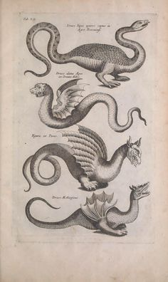 "Dragons from John Jonston's ""Historiae naturalis de quadrupedibus libri, cum aeneis figuris / Natural History Book of quadrupeds"", 1657. Biodiversity Heritage Library"