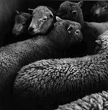Image result for peter Peryer Farm Photography, Still Life Photography, New Zealand, The Unit, Black And White, Animals, Image, Week 5, Proposal