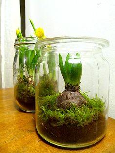 Jardins d'hiver en bocaux