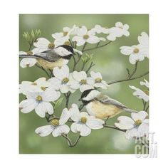 Springtime and Chickadees Giclee Print by William Vanderdasson at Art.com
