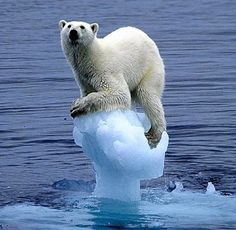 A polar bear balances precariously on a block of ice in this picture that was selected for the World Wildlife Fund's Earth Book