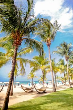 Puerto-Rico-Beach-Hammocks - Elizabeth Anne Designs: The Wedding Blog
