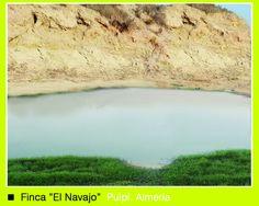 """Finca """"El navajo"""" de donde obtenemos la mejor oliva posible, para hacer ACEITE DE OLIVA VIRGEN EXTRA(AOVE).  http://www.oleoalmanzora.com/"""