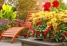 An easy hot-color recipe for months of interest includes coleus, New Guinea impatiens, roses, and hibiscus. Orange lantana and chartreuse- and burgundy-leaf cannas make a nice touch in the background.