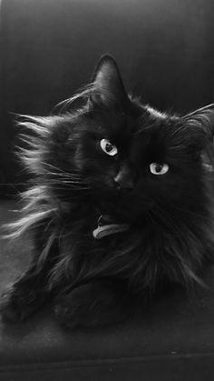 My sweet black Diva Cat