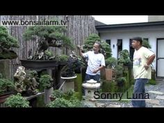 Lindsay farr's World of Bonsai series 2 episode 18